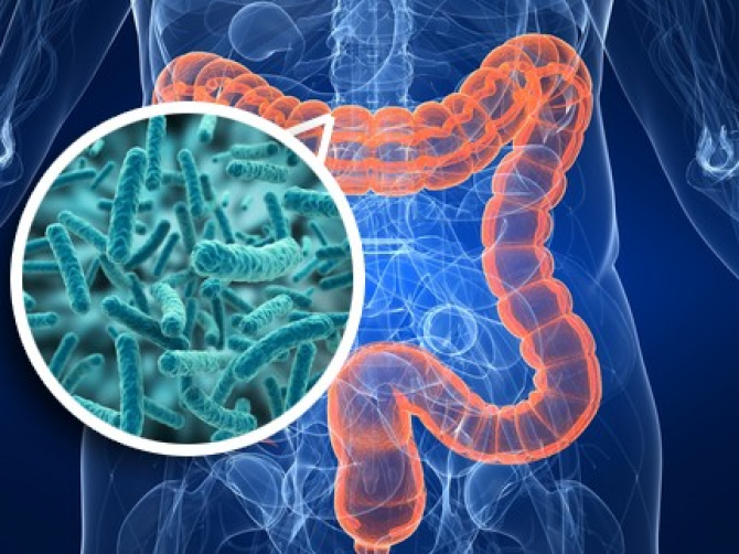 Researchers have found a link between intestinal bacteria and human emotions