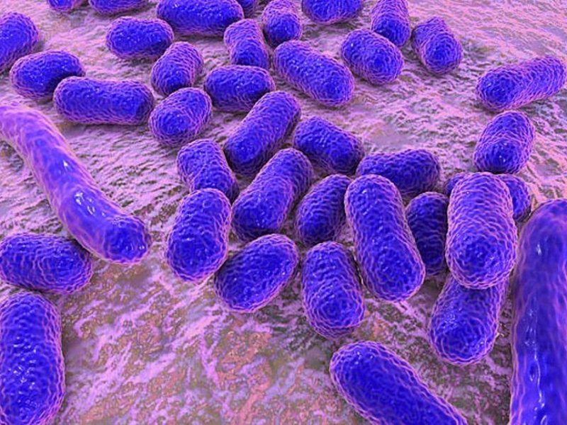 Superbugs can still be treated with antibiotics
