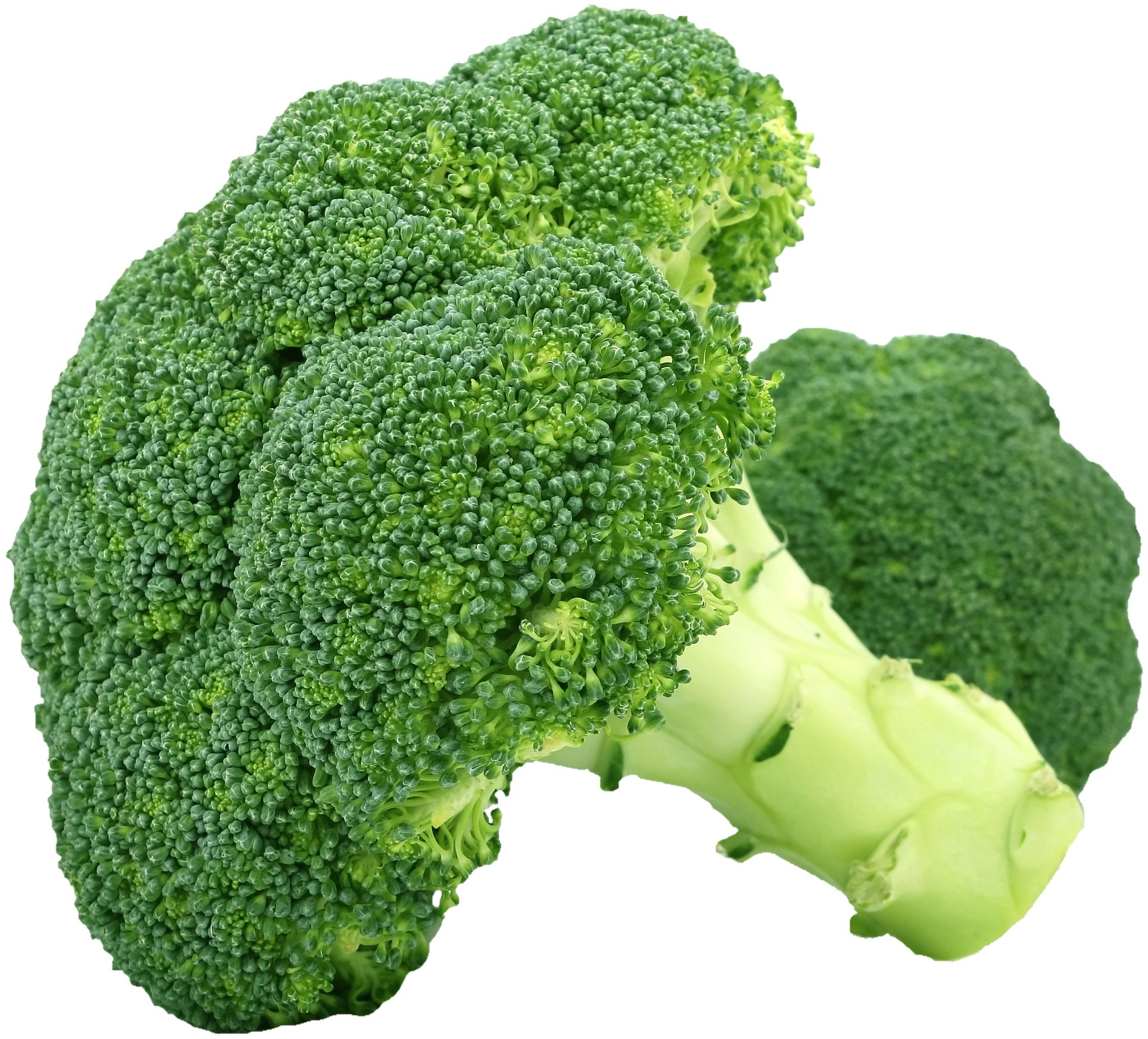 Folate deficiency creates hitherto unknown problems in connection with cell division