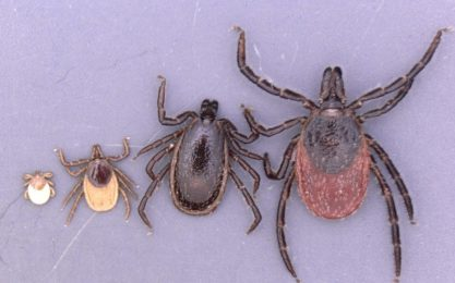 The threat of ticks Invasion in 2019: scientists warn strengthened against new infectious diseases