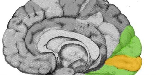 We need to fine-tune our 'maps' of the visual cortex, study shows