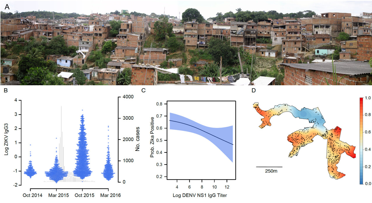 Prior dengue infection protects against Zika
