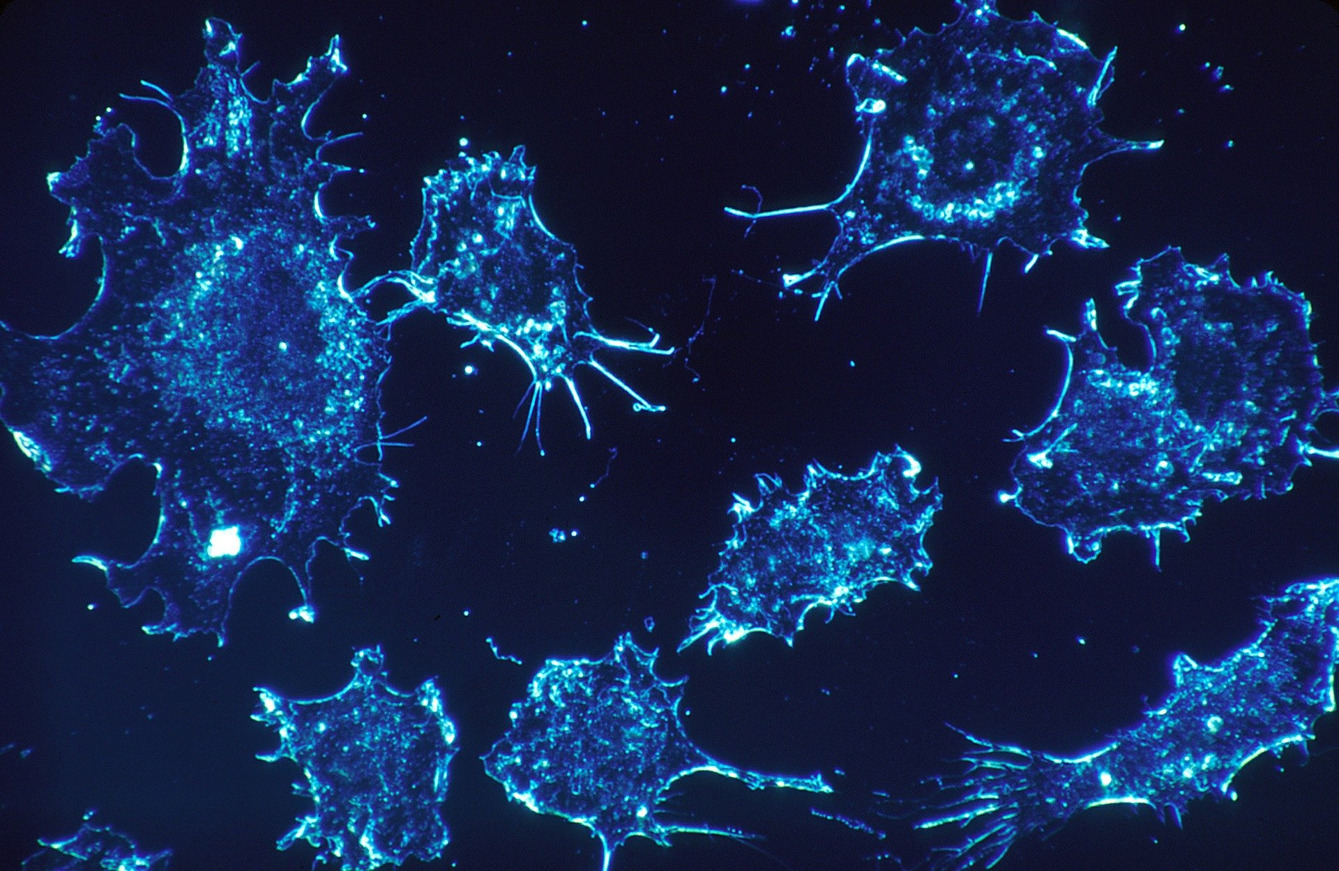 Cannabinoid compounds may inhibit growth of colon cancer cells
