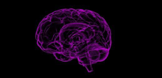 Key brain region for navigating familiar places identified
