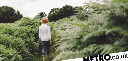 Walking in nature for 20 minutes every day can reduce stress