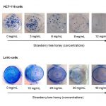 Strawberry tree honey inhibits cell proliferation in colon cancer lines