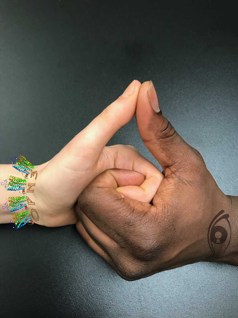 Researchers discover how a member of a family of light-sensitive proteins adjusts skin color