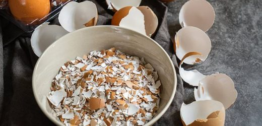 Broken bones could one day be healed with EGGSHELLS