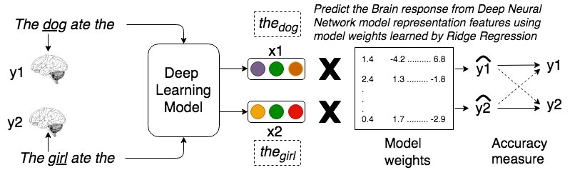 Relating sentence representations in deep neural networks with those encoded by the brain