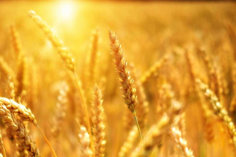 Mayo Clinic study calls for screening of family members of celiac disease patients