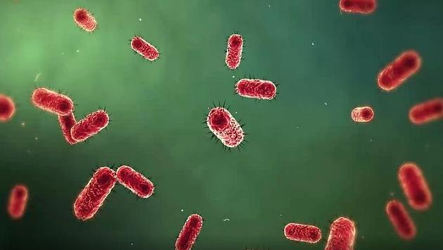 Alzheimer's, cancer, Diabetes: This Super-bacterium should be to blame for people's suffering