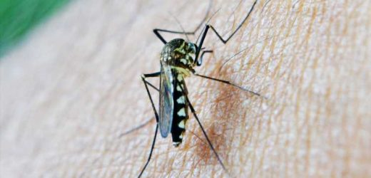 Malaria can and should be eradicated within a generation, declare global health experts
