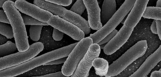 Poor toilet hygiene, not food, spreads antibiotic-resistant E. coli superbugs