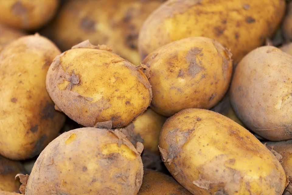 Quinn on Nutrition: Root around for winter vegetables