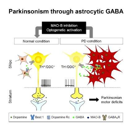 Waking up dormant dopaminergic neurons to reverse Parkinson's disease