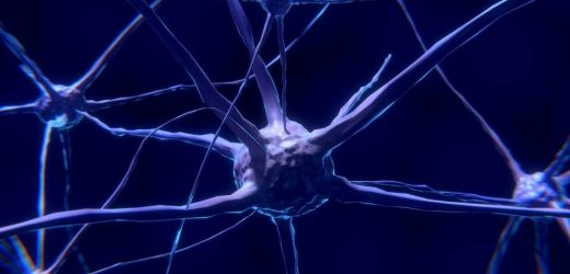 Researchers publish study on nerve cell repair