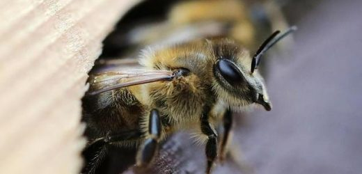 In the case of a Bee sting: What you need to consider, and what help means to the best