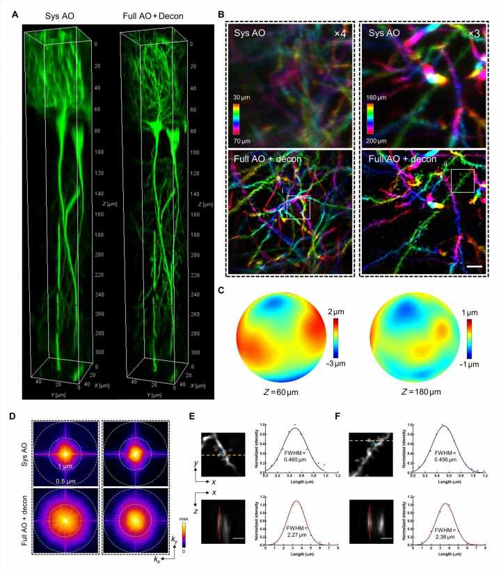 Deep-brain imaging at synaptic resolution with adaptive optics 2-photon endomicroscopy