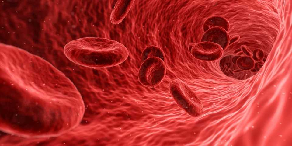 A new strategy for making blood stem cells healthier