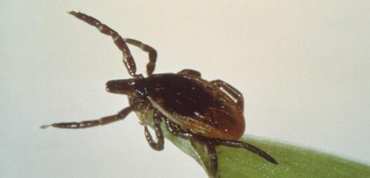 Tick behavior and host choice explains geographical patterns of Lyme disease prevalence