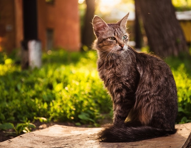 Novel immunotherapy approach to revert the main hallmarks of cat allergy