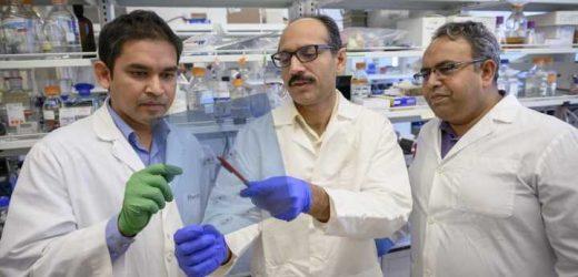 Inflammation-fighting protein could improve treatment of rheumatoid arthritis