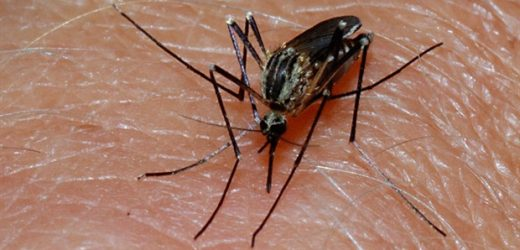 'COVID-19 fears' prevent many Africans from accessing malaria treatment