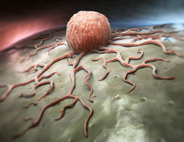 Immuno-PET detects changes in different cancer receptors in response to targeted therapies