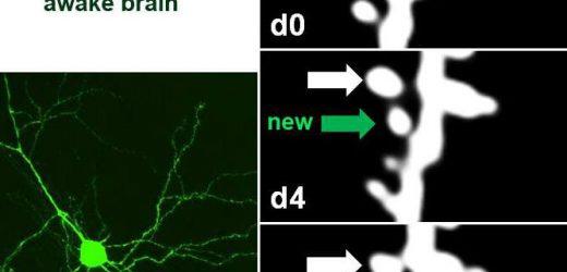 Watching the brain learn