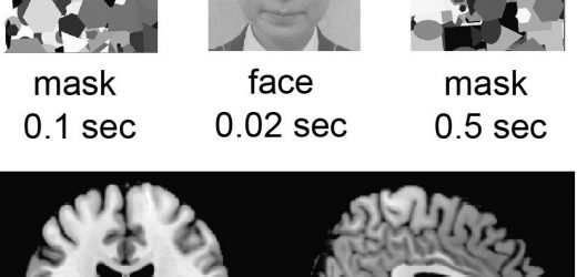 Viewing your own face, even subconsciously, is rewarding