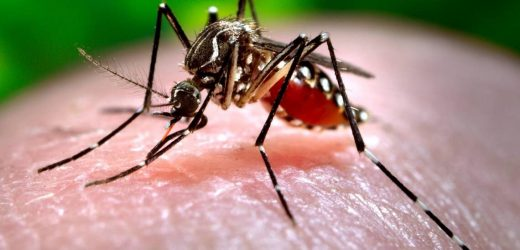 How one of the oldest natural insecticides keeps mosquitoes away