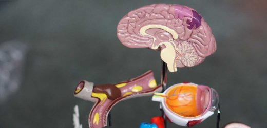 A detailed atlas of the developing brain