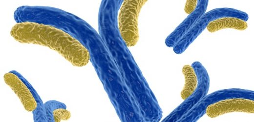 Dual-antibody combination therapies effective against SARS-CoV-2 variants in animal study