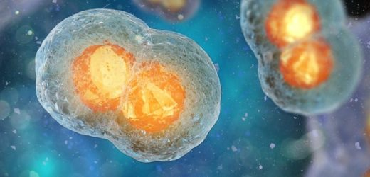 Molecular biologists elucidate the key role of motor proteins in cell division