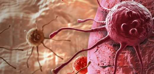 Newly developed spheroidal structure reproduces the microenvironment of tumors