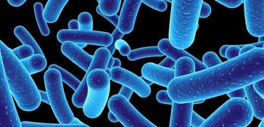 University of Arkansas receives $6.1 million grant to establish an institute focused on virus research