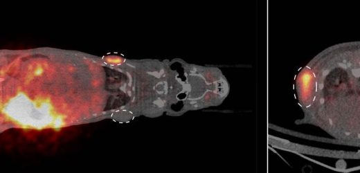Cell labeling method from microscopy adapted for use in whole-body imaging